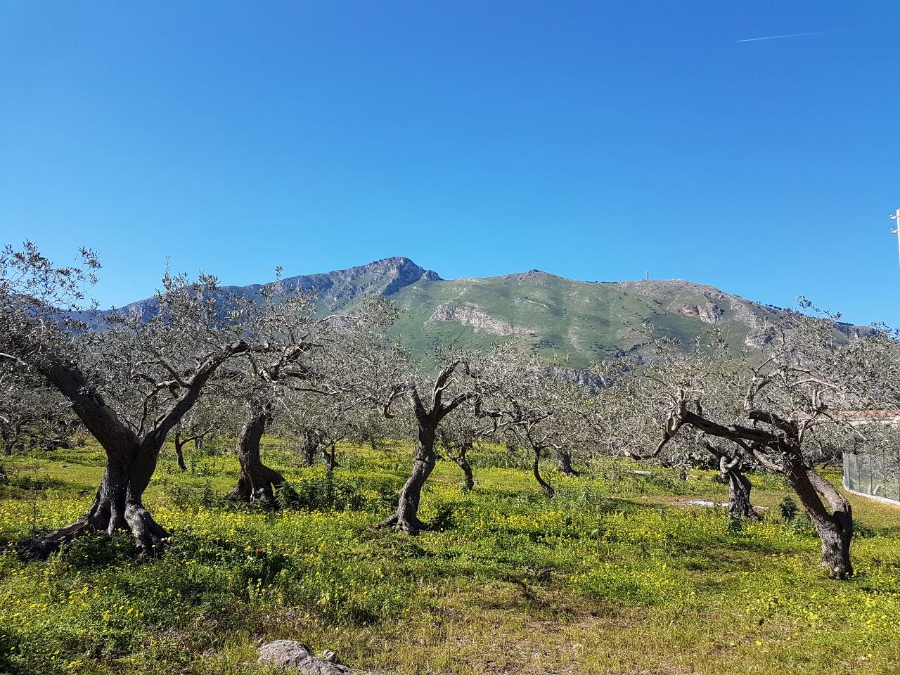 Foto paesaggio sud Italia